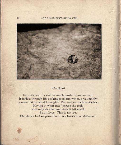 snailemblem